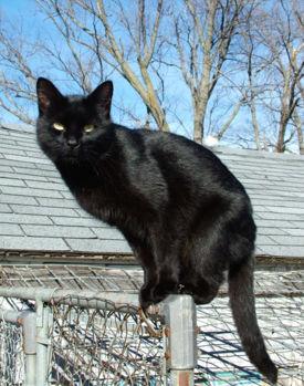 275px-Blackcat-Lilith.jpg