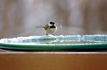 birdy.jpeg