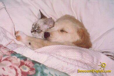 cute-puppy-kitty-cuddling-pic52.jpg