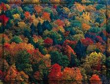 fall-colors.jpg