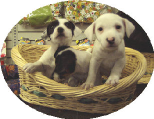 puppy basket.jpg